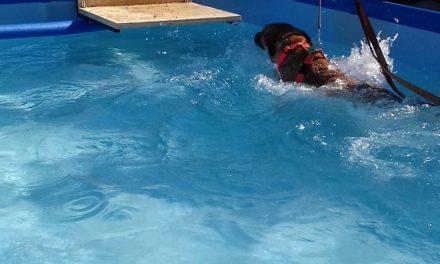Visita al Centro Ippico la Coccinella e a Lurago Dog Beach